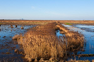 Steart Marshes adjoining the Bristol Channel and the River Parrett Estuary, allowed to flood on high tides to create new saltmarsh habitat. Hinkley Point nuclear power station in background. Somerset,... - John Waters