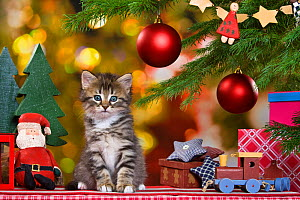 Tabby kitten sitting next to Christmas tree with baubles and other festive decorations. - Klein & Hubert