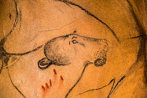 Replica of prehistoric rock paintings of the Chauvet Cave, Chauvet-Pont-d'Arc Cave, Ardeche, France. Showing extinct Cave lion. Editorial use only. - Philippe Clement
