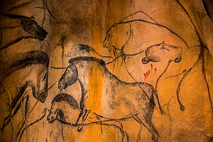 Replica of prehistoric rock paintings of the Chauvet Cave, Chauvet-Pont-d'Arc Cave, Ardeche, Franc. Showing extinct animals, wild horses and cave lions Editorial use only.  -  Philippe Clement