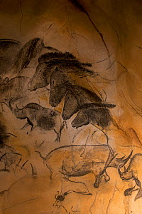 Replica of prehistoric rock paintings of the Chauvet Cave. Replica in Nationalparkzentrum Falkenstein, Bavarian Forest NP, Germany. Showing extinct animals: woolly rhinoceros (Coelodonta antiquitatis)...  -  Philippe Clement