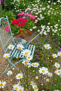 Garden chair with watering can surrounded by flowers. - Ernie  Janes