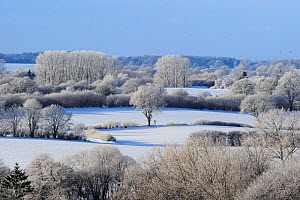 Landscape of snow covered Oak trees (Quercus) woodland and fields,  Germany. December, - Solvin Zankl