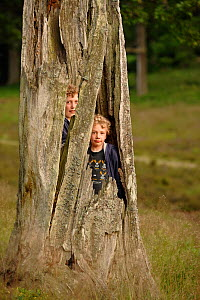 Children playing inside hollow of Sessile oak tree (Quercus petraea) Niedersechsische Elbtalaue Biosphere Reserve, Elbe Valley, Lower Saxony, Germany, July.  -  Solvin Zankl