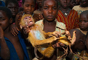 Mozambican children with captive Yellow Baboon youngster (Papio cynocephalus) young animal caught during troop crop raiding. Pemba to Montepuez highway, north-eastern Mozambique, November 2011. Specia... - Jabruson