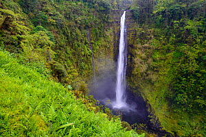 Akaka falls (422 foot) surrounded by vegetation, (much of which is non-native) Akaka Falls State Park, Hawaii.  -  Gerrit  Vyn