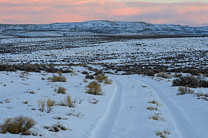 Key winter habitat for Greater sage-grouse in the Alkali Basin. This area is under threat of energy development by the Naturally Pressured Lance gas field project,. Sublette County, Wyoming, USA. Janu...  -  Gerrit  Vyn