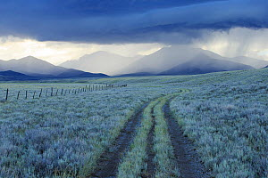 Rain showers over sagebrush-steppe at the foot of the Sawtooth Mountains. Clark County, Idaho, USA, June. - Gerrit  Vyn