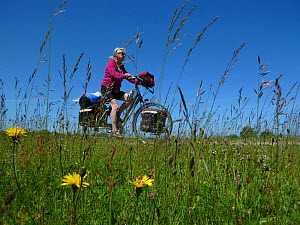 Cyclist riding bike along the 'Saaler Bodden' north-east of Rostock, Germany, June 2013.  -  Willem  Kolvoort