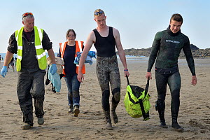 British Divers Marine Life Rescue animal medics Simon Dolphin and Michelle Clement accompanying people carrying an injured Grey seal pup (Halichoerus grypus) 'Boggle' in a ventilated rescue bag, Crack...  -  Nick Upton