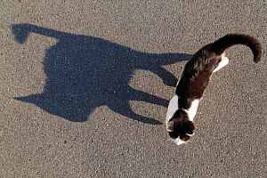High angle view of cat and its shadow, Hiroshima, Japan. - Aflo