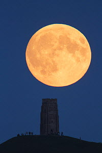 Super moon rising above Glastonbury Tor with people watching, Somerset, England, UK, 27th September 2015. - Peter  Lewis