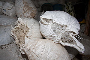 Fishing nets confiscated from poachers, Wafer Bay ranger station, Chatham Bay, Cocos Island National Park,  Costa Rica, East Pacific Ocean. September 2012. - Franco  Banfi