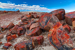 Pieces of petrified trees / wood, Petrified Forest National Park, Arizona, USA, February 2015.  -  Juan  Carlos Munoz