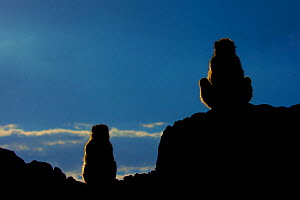 Barbary macaque (Macaca sylvanus) two sitting silhouetted on rocks,  Gibraltar Nature Reserve, Gibraltar,  -  Edwin  Giesbers