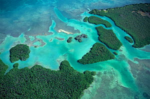 Aerial view of Red mangrove (Rhizophora mangle) coastal lagoon, Sian Ka'an Biosphere Reserve, Caribbean Sea, Mexico, January  -  Claudio  Contreras
