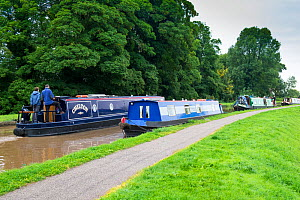House boats on The Shropshire Union Canal, Cheshire, England UK. September 2015.  -  Gary  K. Smith