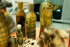 Confiscated bottles of alcohol containing Cobra and other snakes,  in display of confiscated CITES protected wildlife products at Dusseldorf Airport, Germany, June 2015. Products seized by  German Fed...  -  Will Watson