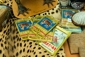 Tiger bone products used in Chinese medicine and other confiscated items in display of confiscated CITES protected wildlife products at Dusseldorf Airport, Germany, June 2015. Products seized by  Germ...  -  Will Watson