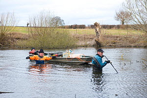 Electro-fishing a glacial kettle hole pond, Kenchester, Herefordshire, England, March.  -  Will Watson