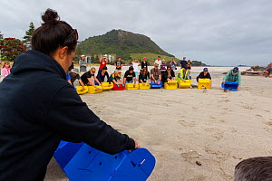 People releasing Little penguins (Eudyptula minor) back to the sea after being rehabilitated following the MV Rena oil spill, Mount Maunganui Beach, Bay of Plenty, New Zealand, November 2011. - Brent  Stephenson
