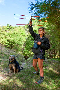 Researcher using radio-telemetry equipment to track a Northern brown kiwi (Apteryx mantelli) fitted with a radio transmitter. Beside her stands a trained kiwi-tracking dog, Cape Kidnappers, Hawkes Bay...  -  Brent  Stephenson