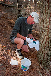 Ranger restocking a poison bait station with bait used to control rodents and Brush-tailed possums (Trichosurus vulpecula) in an intensively managed sanctuary where native bird species are being reint... - Brent  Stephenson