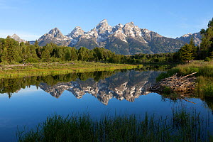 The Grand Teton and the Teton Range reflected in the calm waters of the Snake River, Schwabacher Landing, Grand Teton National Park, Wyoming, USA, June.  -  Kirkendall-Spring