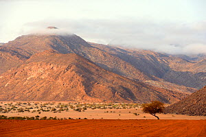 Marienfluss valley during dry season, Kaokoland, at the frontier,  the mountains are Angola, Kunene region, Namibia, Africa  -  Eric Baccega