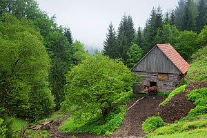 Wide angle of a man with a horse outside a stable, Ciuc Mountains, Transylvania, Romania, May 2015.  -  Orsolya Haarberg