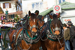 Carriage pulled by four horses parading during the Leonhardiritt or Leonhardifahrt, the traditional horse procession of St Leonard, in Bad Tolz, Upper Bavaria, Germany. November 2015  -  Kristel  Richard