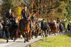 Two riders and two carriages pulled by four horses parading during the Leonhardiritt or Leonhardifahrt, the traditional horse procession of St Leonard, in Bad Tolz, Upper Bavaria, Germany. November 20...  -  Kristel  Richard