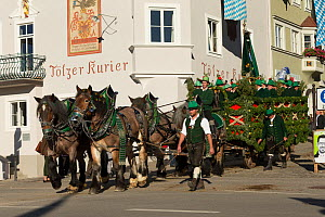 Carriage pulled by four Belgian draft horses parading during the Leonhardiritt or Leonhardifahrt, the traditional horse procession of St Leonard, in Bad Tolz, Upper Bavaria, Germany. November 2015  -  Kristel  Richard