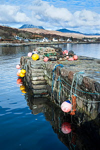Lobster traps and buoys on pier at Craighouse, Jura, Inner Hebrides, Scotland, April 2014.  -  Niall Benvie