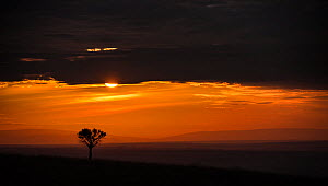 Sunrise over the open plains of East Africa. Masai Mara Kenya. August 2014.  -  Wim van den Heever