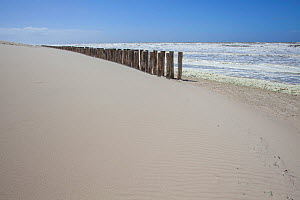 Stormy waves on the shore, with groynes, Berck, Pas De Calais, France, May 2015.  -  Pascal  Tordeux
