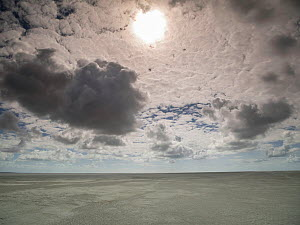 Beach at low tide with sun behind clouds, Crotoy, Somme Bay, Pas De Calais, France, July 2015.  -  Pascal  Tordeux