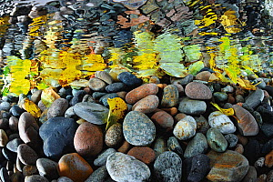 Pebbles reflected in the water surface at mouth of Sheryldy river, Lake Baikal, Siberia, Russia.  September  -  Olga Kamenskaya
