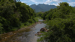 River running thorugh an area of Atlantic Forest, with mountins in the background, Reserva Ecologica de Guapiacu, Rio de Janeiro, Brazil, 2015.  -  Five Films