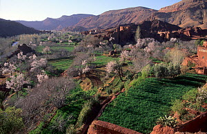 View over agricultural land including blossoming orchards and a village of the Dades Valley, High Atlas Mountains, Morocco.  -  Cyril Ruoso