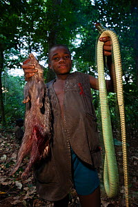 Baka boy holding up Mamba snake (Dendroaspis sp) and African brush tailed porcupine (Atherurus africanus) killed during hunt, South East Cameroon, July 2008.  -  Cyril Ruoso