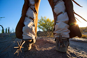 Cowboy's legs wearing chaps over trousers to protect himself from the spiny desert, Vizcaino Desert, Baja California, Mexico, May 2008. - Cyril Ruoso