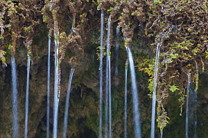 Water seeping through moss in naturally formed tufa dam. Tufa is a kind of limestone, formed from the precipitation of carbonate minerals which builds up around the mosses (Cratoneuron commutatum and...  -  Alex  Hyde