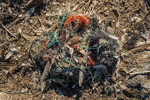 Marine litter lined northern gannet (Morus bassanus) nest. Grassholm Island, Wales, UK. October - Sam Hobson