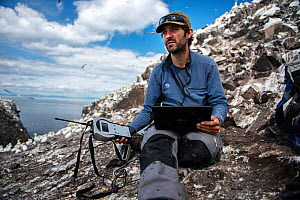 Seabird researcher retrieves data from high resolution GPS loggers attached to Northern gannets (Morus bassanus). Bass Rock, Scotland, UK. August - Sam Hobson