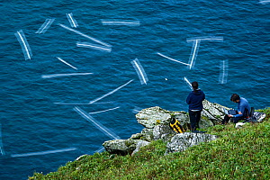 Seabird researchers track GPS logged Northern gannets (Morus bassanus). Ailsa Craig, Scotland, UK. August 2015. - Sam Hobson