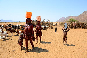 Himba women and children returning from the waterpoint, carrying plastic can full of water on her head. Marienfluss Valley, Kaokoland Desert, Namibia. October 2015  -  Eric Baccega