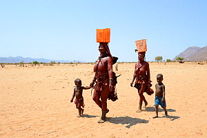 Himba women and children returning from the waterpoint, carrying plastic cans full of water, during dry season, Marienfluss Valley, Kaokoland Desert, Namibia. October 2015  -  Eric Baccega