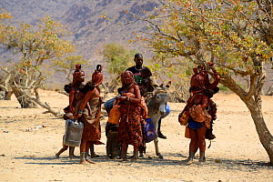 Himba women and man riding on a donkey going to collect water at the nearby waterpoint, during dry season, Marienfluss Valley, Kaokoland Desert, Namibia. October 2015  -  Eric Baccega