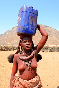 Himba woman returning from the waterpoint, carrying on plastic can full of water on her head, during the dry season, Marienfluss Valley, Kaokoland Desert, Namibia. October 2015  -  Eric Baccega